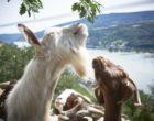 DB Netz AG und BImA bieten seltenen Tier- und Pflanzenarten neues Zuhause