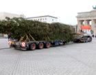 Universal Transport bringt Weihnachtsbaum nach Berlin
