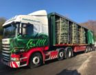Eddie Stobart covers over 300,000 miles to deliver Christmas trees