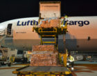 Lufthansa Cargo transportiert 900 Tonnen Rosen zum Valentinstag nach Europa