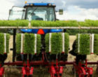 Stevia supply chain sustainability under scrutiny